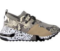 Beige Steve Madden Sneaker Cliff Sneaker