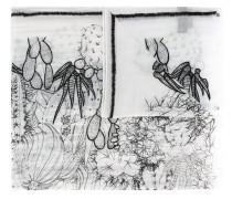 Schal mit Kaktus-Print - women
