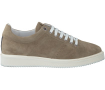 Taupe Nubikk Sneaker NOAH LACE