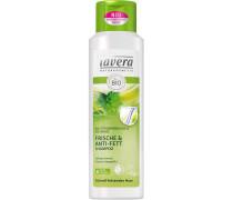 Haarpflege Shampoo Frische & Anti-Fett Shampoo