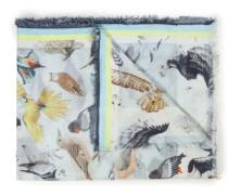 Volare Birds